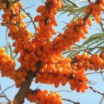 Amazing antioxidant fruit oil